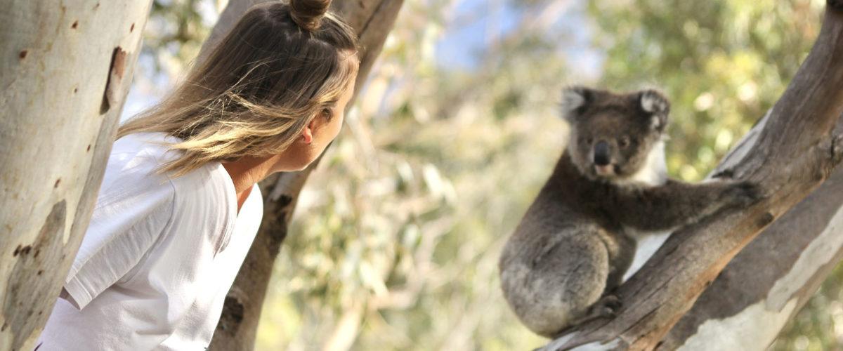 Koala Slider