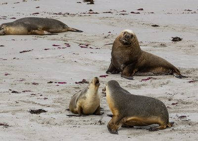 Amazing-sea-lions-having-fun-1